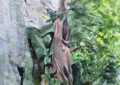 Yew tree at Shorn Cliff
